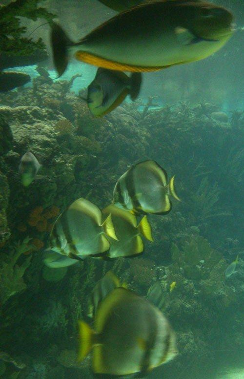 burgerszooocean1