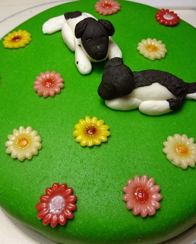 taart honden stabij